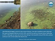 Collage of photos showing a cyanobacteria bloom.