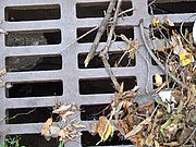 Remove debris from stormdrains so it doesn't end up in waterways. Photo by www.morguefile.com.